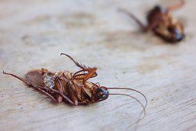 Insekty, które najczęściej żyją w naszych domach. Jak się ich pozbyć?