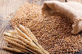 Pszenica - kalorie i wartości odżywcze, wpływ na zdrowie, przeciwwskazania