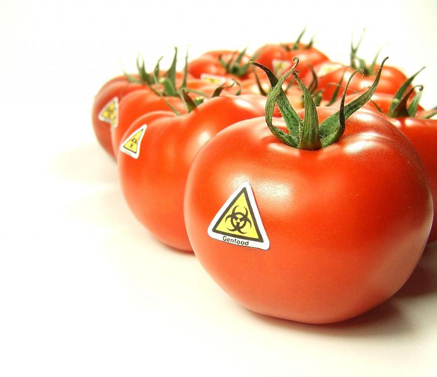 Żywność GMO ma zły wpływ na szczelność jelit