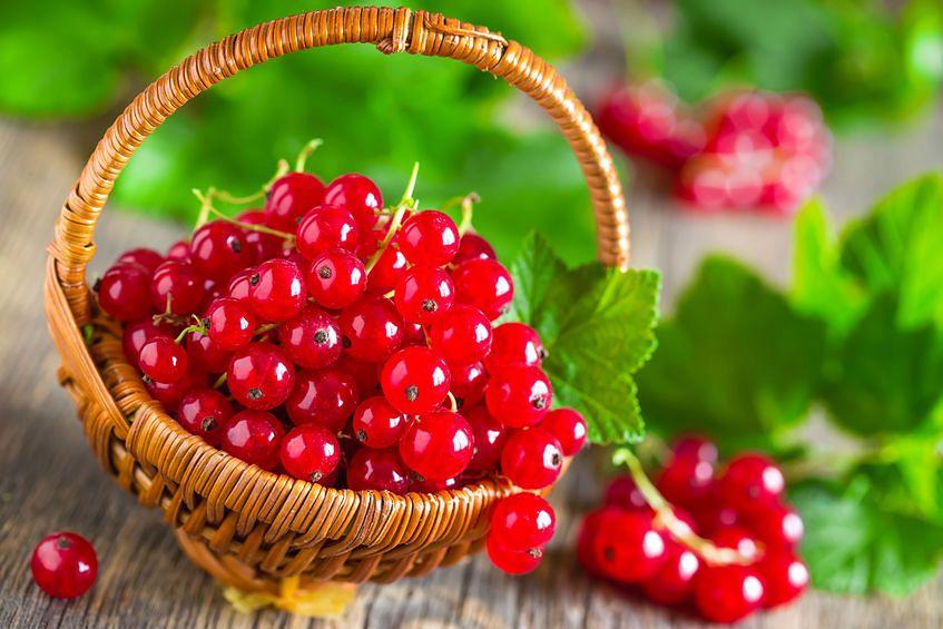 Czerwona porzeczka - 46 mg witaminy C w 100 g produktu