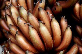 Ich czerwoną odmianę kupisz w dyskoncie za 10 zł. Jakie właściwości mają czerwone banany?