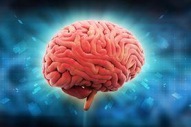 Śmierć mózgu, czy naprawdę istnieje? Czyli o kontrowersjach w transplantologii