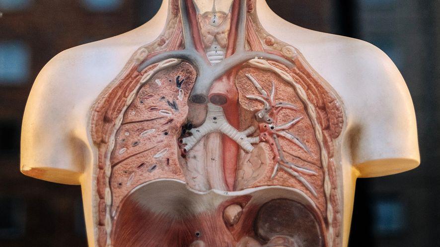 IBM Watson pomaga lekarzom: dopasowuje leczenie raka nie gorzej niż onkolog