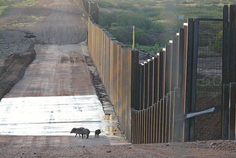 Potężny mur na granicy z Białorusią. Ujawniono koszt budowy