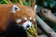 Czy Mozilla zdoła się podnieść po premierze Microsoft Edge? - fot. Shutterstock.com