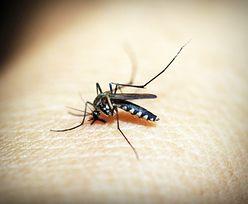 Plaga komarów. Znamy sposób na walkę z kąsającymi owadami