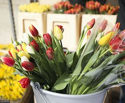 Trik na zwiędnięte tulipany. Efekt niemal natychmiast