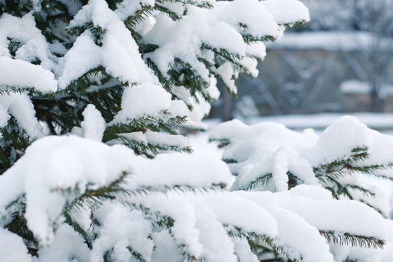 Co z pogodą na święta? Będzie śnieg? Ekspert IMGW wyjaśnia