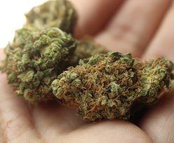 Radom. 20-latka zaproponowała policjantom marihuanę w zamian za podwiezienie do domu
