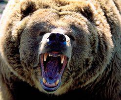 Niedźwiedź na ulicach Zakopanego. Przyjechała policja