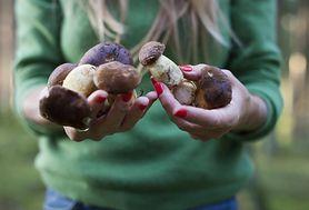 Opieńki – rodzaje, bezpieczeństwo i sposób przygotowania grzybów