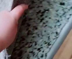 Niesamowite odkrycie pod dywanem. Nie mieli o tym pojęcia