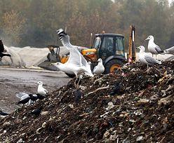 Polska śmietnikiem Europy. Sprowadzamy coraz więcej odpadów