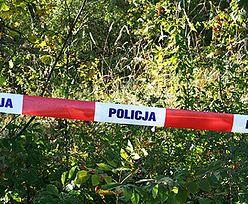 Makabryczne wydarzenie na Pomorzu. Znaleziono rozczłonkowane ciało, było pogryzione przez dziki