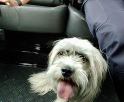 Małopolskie. Policjanci uratowali psa przywiązanego między pasami ruchu
