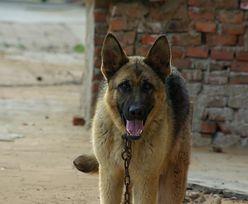 Opolszczyzna: 5-latek dotkliwie pogryziony przez psa. Malca broniła ciężarna matka