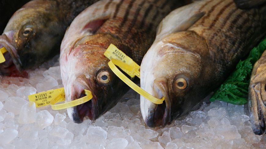 Rozsądne zakupy - lokalne sklepy mięsne i rybne