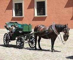 Inowrocław: pijany woźnica woził turystów. Pokazywał im miasto