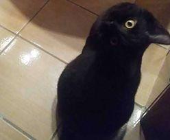 Kot czy wrona? Ta iluzja optyczna jest hitem internetu