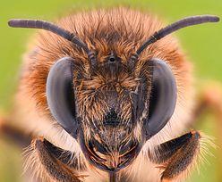 Pszczoły zaatakowały kobietę. Przykryły ją od stóp do głów