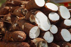 Właściwości manioku jadalnego. Dlaczego warto po niego sięgnąć?
