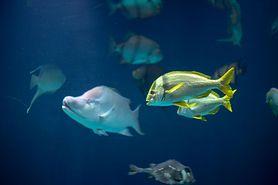 Ciguatera – przyczyny, objawy i leczenie zatrucia toksynami morskimi
