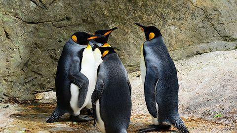 Firmy motoryzacyjne powinny dołączyć do The Linux Foundation. Właśnie zrobił to Hyundai