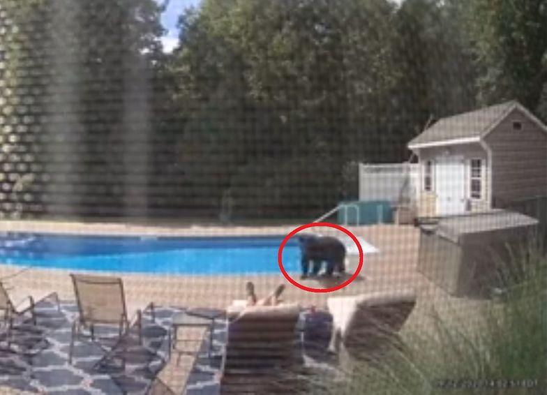 Wypoczywał przy basenie. Nagle zamarł