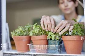 9 ziół leczniczych, które możesz uprawiać w domu