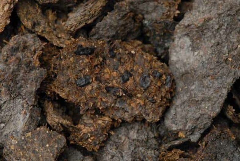 Naukowcy w szoku. Nie uwierzysz, co jedli górnicy 2,7 tys. lat temu