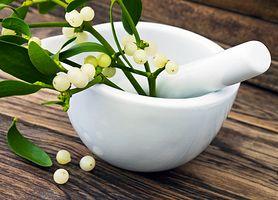 Jemioła - skład, wpływ na zdrowie, przeciwwskazania
