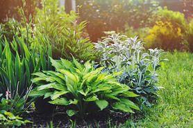Kleszcze w twoim ogrodzie – nie musisz się ich bać