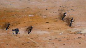 3 sposoby na pozbycie się mrówek (WIDEO)