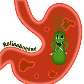 Helicobakter pylori test - charakterystyka bakterii, czynniki ryzyka zakażeń, wskazania do diagnostyki, test,  choroby wynikające z zakażenia, leczenie, profilaktyka