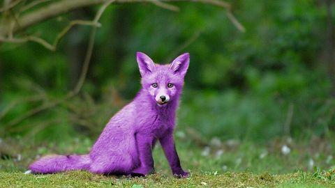 Malware Purple Fox jest teraz jeszcze bardziej złośliwy
