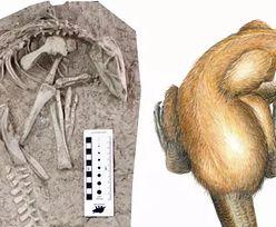 Niesamowite odkrycie w Chinach. Ma ponad 100 milionów lat