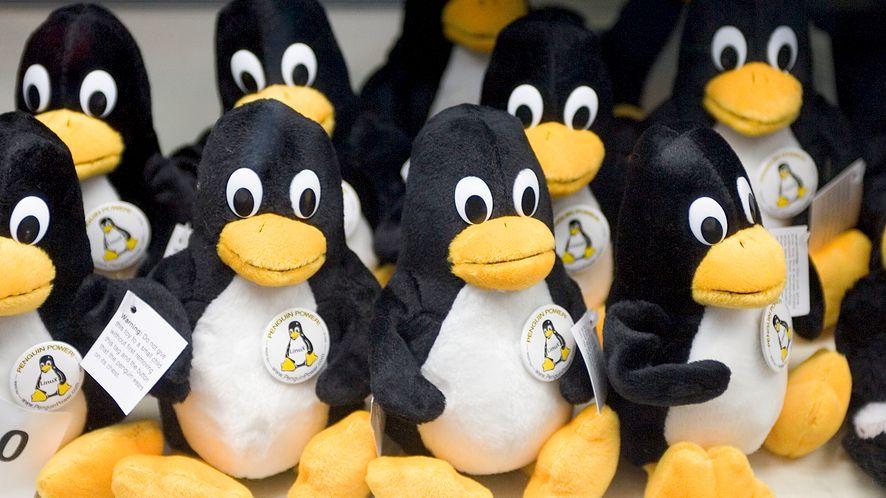 Linux 5.10 jest już dostępny w wersji RC5, fot. Getty Images