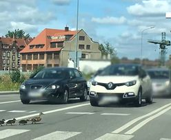 Gdańsk. Kierowca, który rozjechał pisklę, namierzony przez policję
