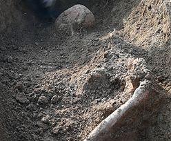 Niezwykłe odkrycie w pobliżu Sewilli. W grobowcu, który ma 5 tys. lat