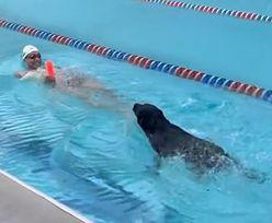 Tak poczwórny mistrz olimpijski wyprowadza psa. Po mistrzowsku!
