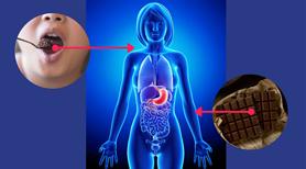 Co się dzieje w organizmie po zjedzeniu czekolady?