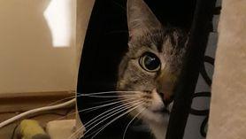 Kotek z zespołem Pica. Właściciele zbierają pieniądze na leczenie zwierzaka