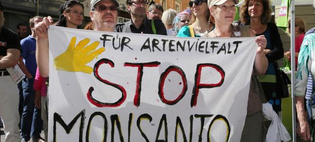 Część ekspertów twierdzi, że glifosat produkowany m.in.  przez Monsanto ma działanie rakotwórcze.