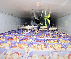 Afgańczycy ukryli się w transporcie jabłek. Do Polski jechali 4 dni