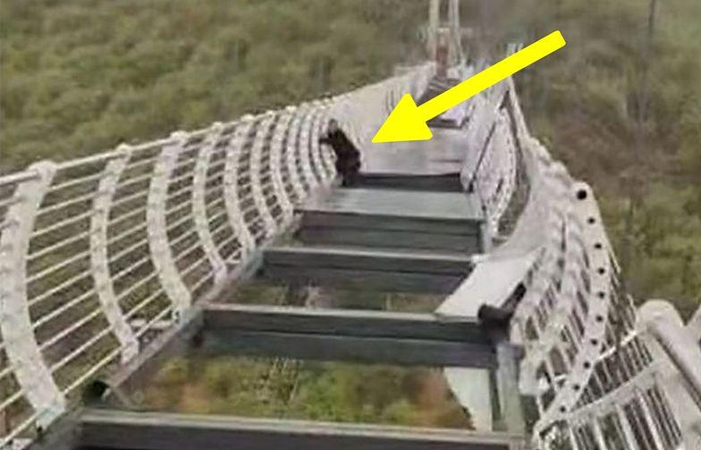 Szklany most nie wytrzymał. Dramat turysty. Utknął 100 metrów nad ziemią