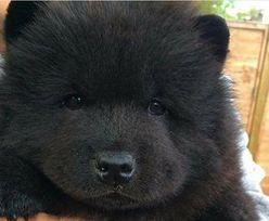 Chinka chciała mieć psa. Po 2 latach okazało się, co jej sprzedano