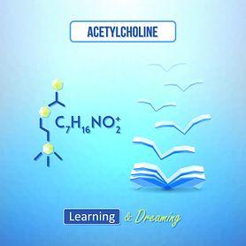 Acetylocholina – źródła, rola, niedobór, nadmiar