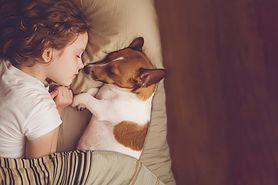 Pies dla alergika. Jakie rasy będą odpowiednie?