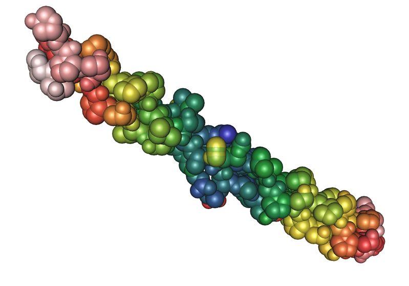 Obraz włókna kolagenu