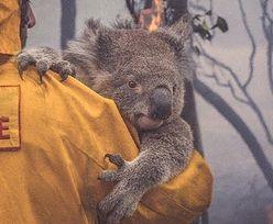 Australia. W pożarach zginęło już miliard zwierząt